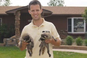 David w raccoon babies