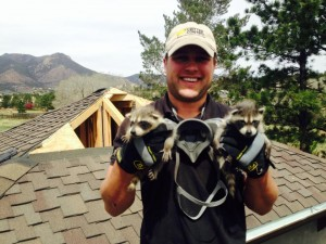 Ross w raccoon babies